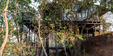 印度巨大茅草屋顶下,一棵老树穿墙而出