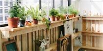 风水大师:家里绿植这样摆可以旺财