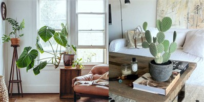 新装修的房子摆放什么植物去甲醛 室内去甲醛植物推荐